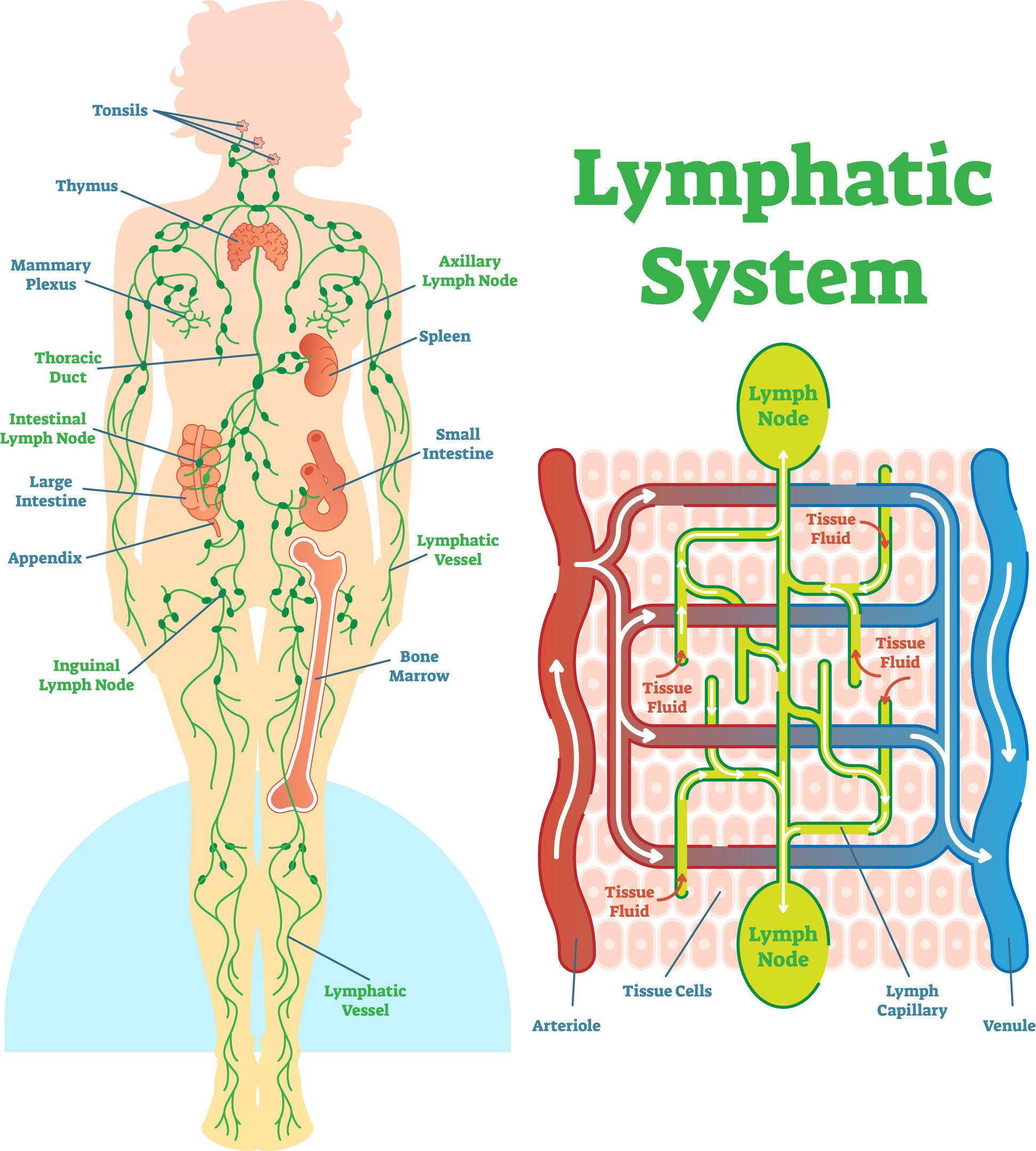 Manual Lymphatic Drainage   Lymph Drainage Puyallup   MLD Tacoma